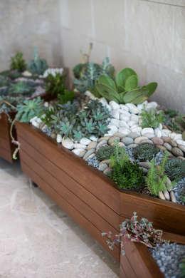 Diseño de jardín interior.: Paisajismo de interiores de estilo  por Dovela Interiorismo