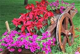 Сады в . Автор – ATELEON