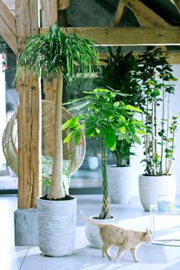 Projekty,  Zieleń wewnątrz zaprojektowane przez Pflanzenfreude.de