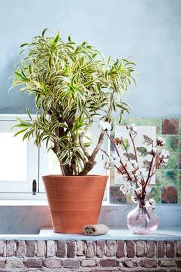 Mehr tiefe im wohnzimmer mit diesen sieben tipps zur for Zimmerpflanzen dekorativ