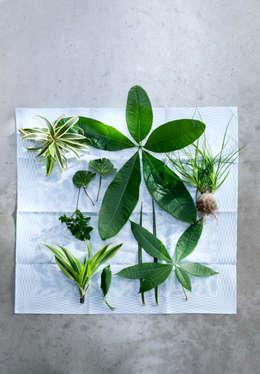 Binnenbeplanting door Pflanzenfreude.de
