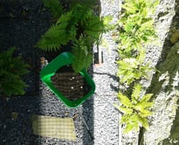 Jardines de estilo minimalista por LASUMA paisajistak