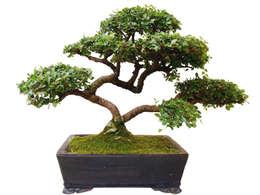 modern Garden by Genki-Bonsai