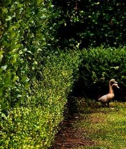 Jardines de estilo moderno por Arq. PAULA de ELIA & Asociados