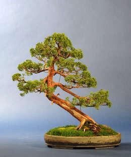 Projekty,  Ogród zaprojektowane przez Bonsai-Shopping