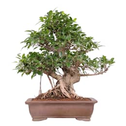 Interior landscaping by Bonsai-Shopping