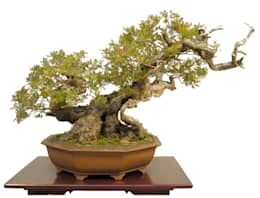 Paisajismo de interiores de estilo  por Bonsai-Shopping
