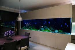 Comedores de estilo moderno por Aquarium Architecture