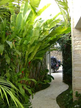 Jardin de style de style Tropical par Eduardo Delphino Paisagismo