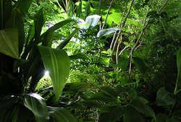 eclectische Tuin door Fertiles