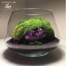 Paisajismo de interiores de estilo  por Terrarium love