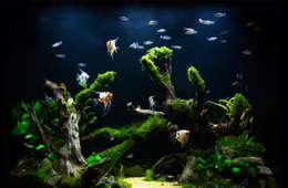 Projekty,  Korytarz, przedpokój zaprojektowane przez Aquarium Architecture