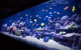 Bars & clubs door Aquarium Architecture