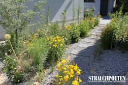 Ausgefallene Staudenpflanzung für sonnigen Vorgarten: moderner Garten von Strauchpoeten