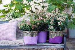 Zarte Schneeball-Blüten  in Kombination mit Töpfen in Lavendel: klassischer Garten von Pflanzenfreude.de