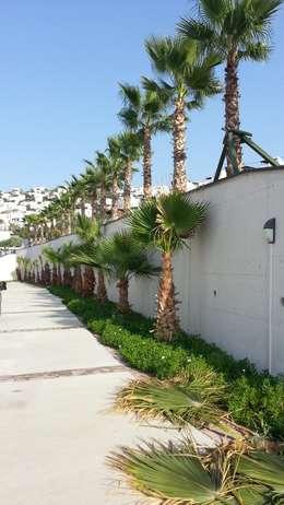 modern Houses by SAYTAS SABUNCUOGLU YAPI VE TIC.LTD.STI.