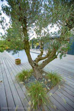 Jardins modernos por Osmoz Paysage