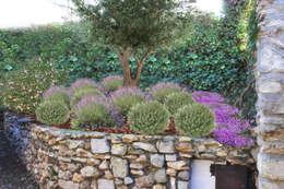 Massif provençal: mediterraner Garten von homify