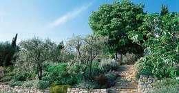 Jardins secs: Jardin de style de style Méditerranéen par REV