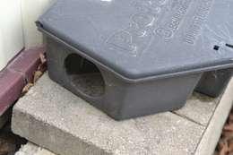 Setting rat traps:   by Pest Control Pretoria