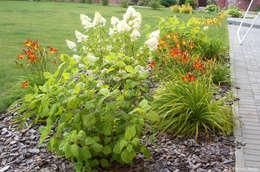 Цветочная композиция: Сад  в . Автор – Aster Garden