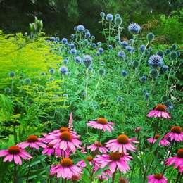 Echinacea und Disteln: klassischer Garten von grasgrau - GARTENDESIGN