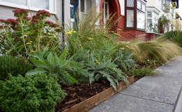 Front garden planting: modern Garden by Tom Massey Landscape & Garden Design