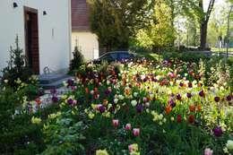 Blütenreicher Vorgarten: moderner Garten von Büro Christian Meyer