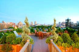 حديقة تنفيذ Amber Freda Home & Garden