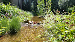 Сады в . Автор – GroenerGras Hoveniers