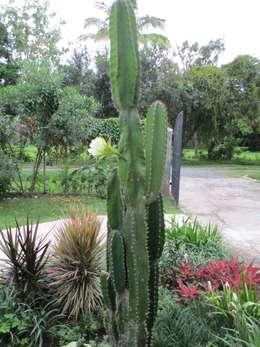 Jardines de estilo rural por TARTE LANDSCAPES