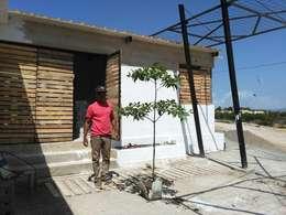Transplantando vegetación nativa a patio interno de la vivienda: Casas de estilo minimalista por Taller de Desarrollo Urbano