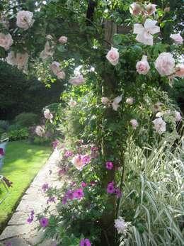 Сады в . Автор – Caroline Benedict Smith Garden Design Cheshire