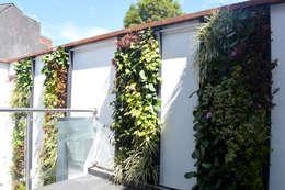 JARDINES VERTICALES: Jardines de estilo moderno por Elementum Arquitectos SAS