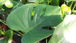 Paisajismo de interiores de estilo  por Perfect Plants Ltd