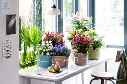 Zimmerpflanzen:  Raumbegrünung von Pflanzenfreude.de