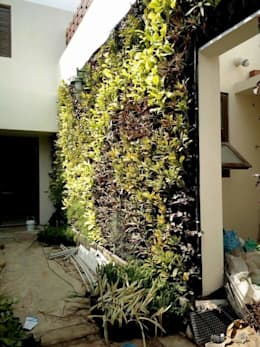 After plantation on vertical gardens:   by Vertical Gardens, Lifewall