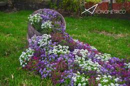 Jardines de estilo moderno de Axonometrico