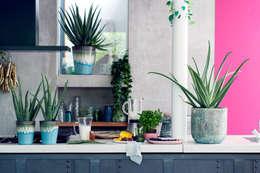Zimmerpflanze des Monats:  Raumbegrünung von Pflanzenfreude.de