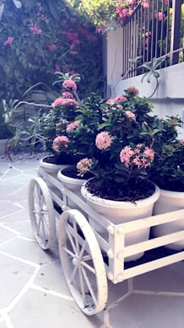 PLANTERS:  Front yard by DESIGNER'S CIRCLE