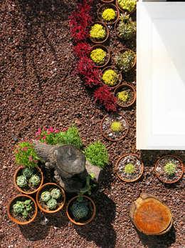 industrialer Wintergarten von Mexikan Curious