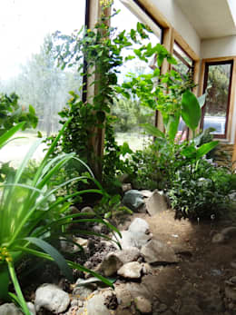Jardin interior casa Rio Claro: Jardines de invierno de estilo rural por casa rural