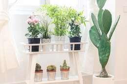 Plantas naturales en la vivienda: Paisajismo de interiores de estilo  de Rez estudio
