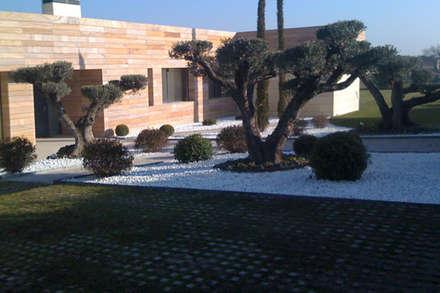 Viveros Rucat - Viveros Madrid: Jardines de estilo moderno de Viveros Rucat - Viveros Madrid