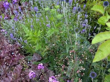Pinks and purples: rustic Garden by Anne Macfie Garden Design