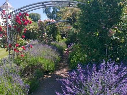 Romantic rose garden: classic Garden by Roger Webster Garden Design