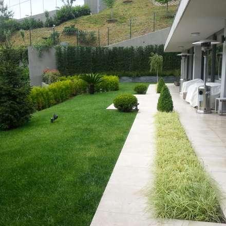 abelia peyzaj – çubuklu: modern tarz Bahçe