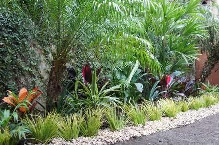Jardines de estilo topical por Estudio Nicolas Pierry: Diseño en Arquitectura de Paisajes & Jardines