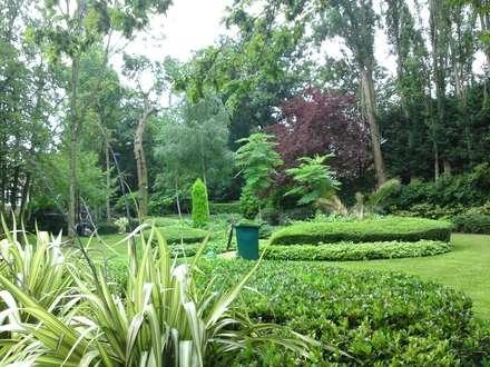 Garden maintenance: tropical Garden by Greenmans Yard