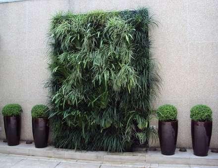 modern Garden by Amaria Gonçalves  - home garden